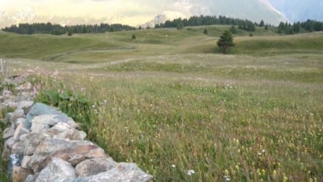 Die Alp Flix (GR) ist eine Schatzinsel der Artenvielfalt