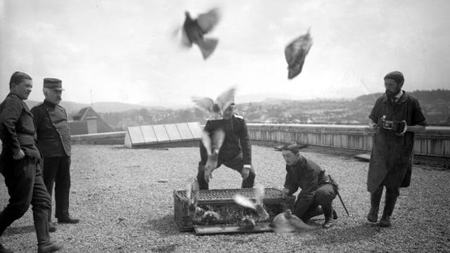 Seit 1917 flogen Brieftauben im Dienst der Schweizer Armee.