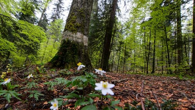 Blick in Waldstück