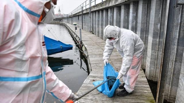 Zwei Personen in Schutzanzügen stecken einen toten Vogel in einen blauen Plastiksack.