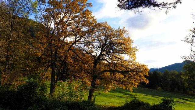 Herbststimmung bei Campodels.