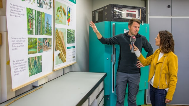 Gabor Reiss erklärt Mona Vetsch wie man Baumsamen sammelt