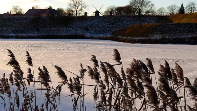 Schilf wiegt sich im Wind, vor gefrorenem Kanal, dahinter Windmühlen.