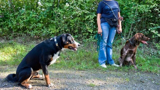 Zwei Hunde und Hundebesitzerin