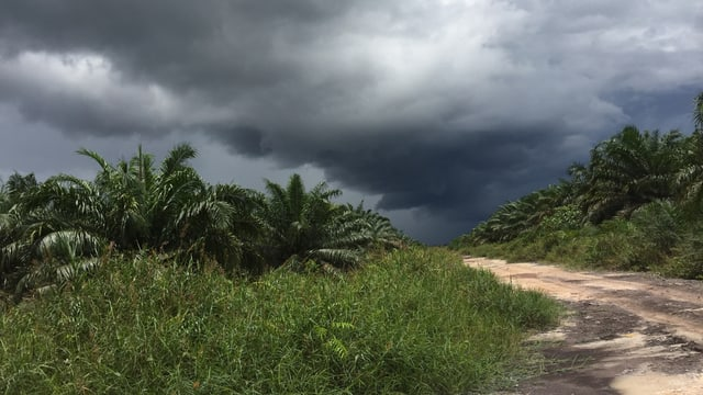 Dunkle Wolken über einer Strasse, beidseits Palmen.