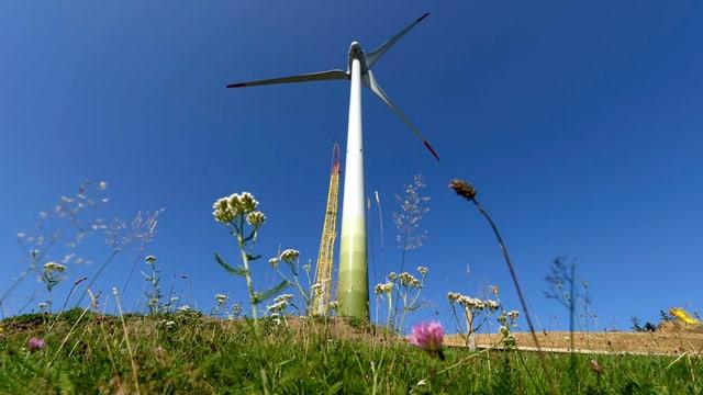 Windrad auf der grünen Wiese