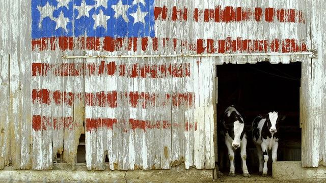 2 vatgas en ina stalla americana.