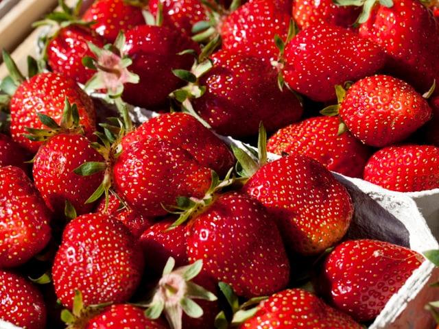 Mengenmässig gibt es noch keine Probleme bei der Ernte von Erdbeeren. Allerdings müssen Bauern vermehrt faule Beeren aussortieren. Die Bauern hoffen jetzt auf schöneres Wetter.