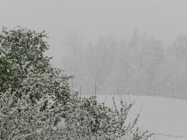 Starkschneefall.