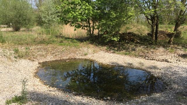Teich im Kiesbeet