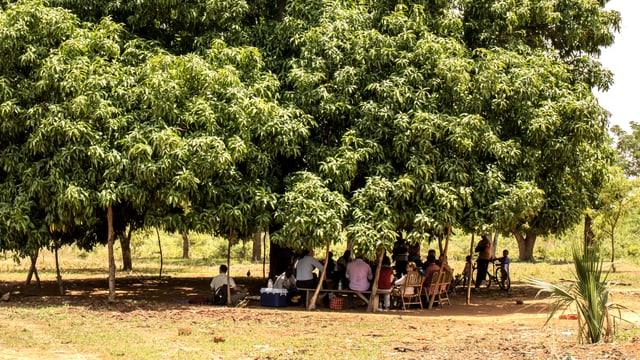 Menschen sitzen unter einem grossen Baum zusammen.