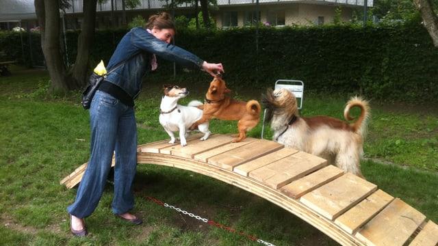 drei Hunde spielen auf einem Holzbogen, einer Holzbrücke