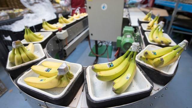 Bananen-Terminal.