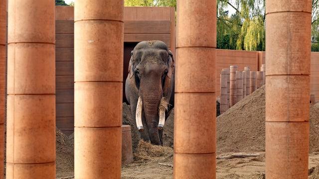 Anlage für aiatische Elefanten im Kopenhagener Zoo.