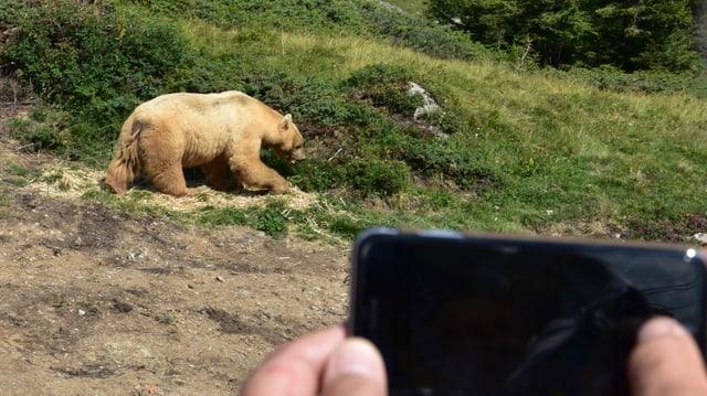 urs Napa durant ir en il liber, davantvart cameras d'aspectaturs