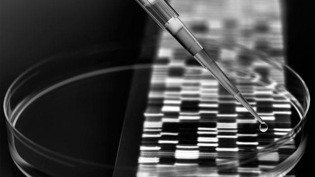 Petrischale über einer Gensequenz