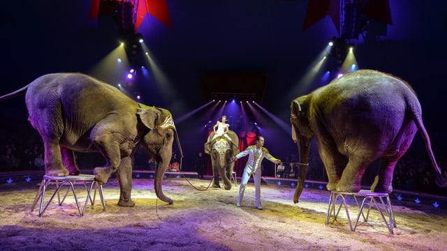 Zwei Elefanten in einem Zirkus stehen auf Sockeln.