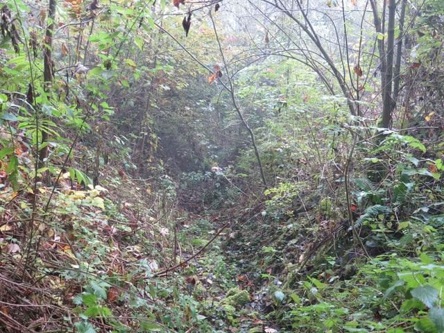 Gestrüpp und Wald