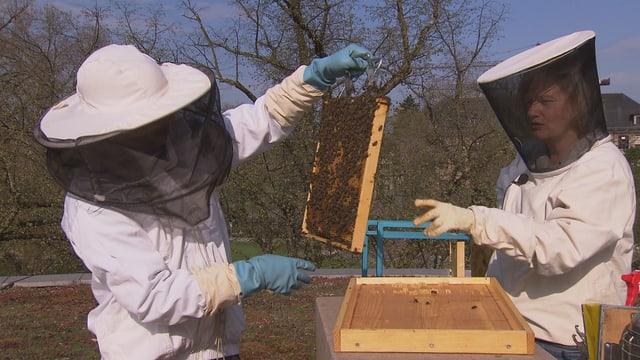Eine Frau und ein Mann in Imker-Schutzkleidung überprüfen die Bienenwaben.