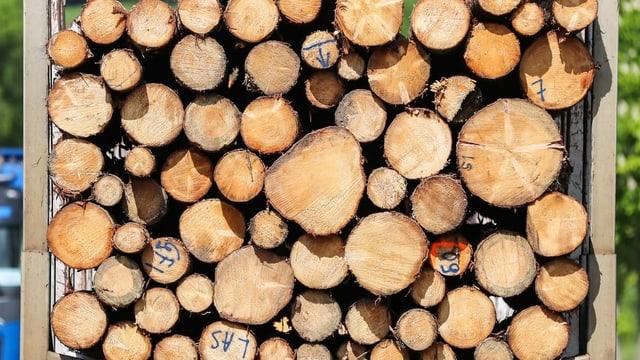 Stapel mit geschlagenen Holzstämmen