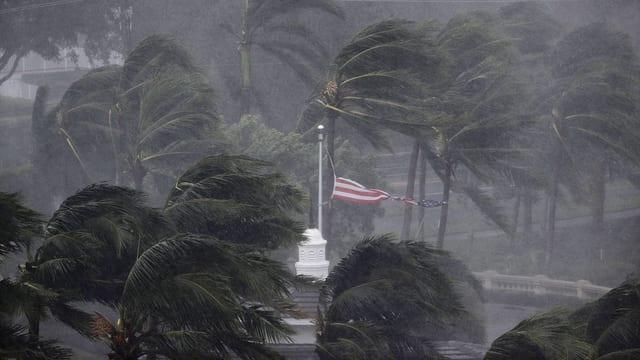 Palmen biegen sich im Wind, eine US-Flagge zerreisst.