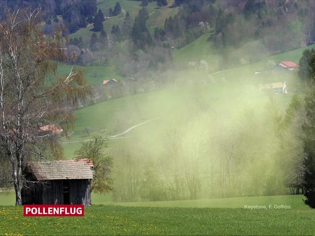 Eine gelbe Pollenwolke schwebt neben einem  Holzhaus und über und einer grünen Wiese.