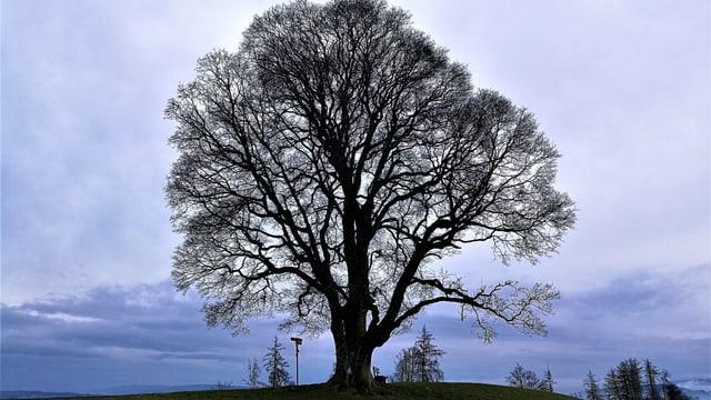 Einzelner Baum in grüner Landschaft.