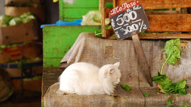 Eine Katze an einem Marktstand.