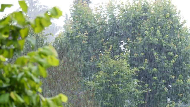 Starkregen prasselt auf Bäume und Sträucher nieder.
