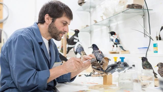 Vinciguerra präpariert einen Vogel.