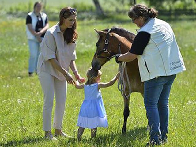 Leore strechelt auf einer Wiese ein Pferd.