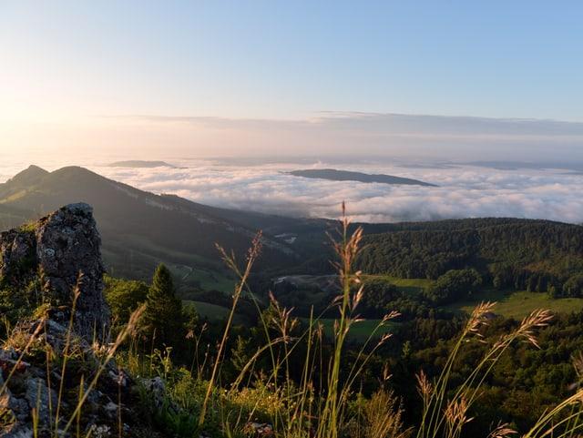 Von einem Berg geht der Blick über bewaldete Hügel zu einem nebelgefüllten Tal. Die Sonne steht noch tief.