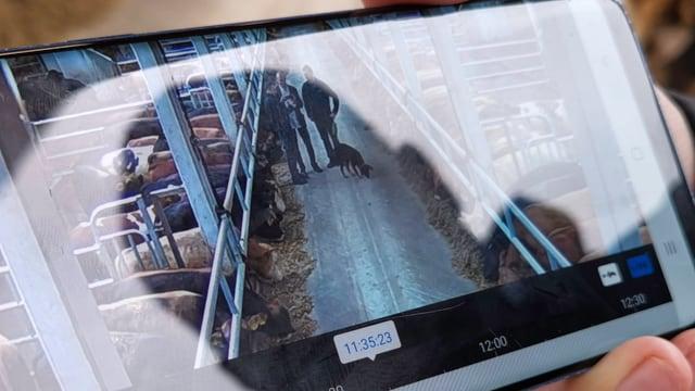 Ein Smartphone-Bildschirm mit der Aufnahme des Stalls aus einer Überwachungskamera.