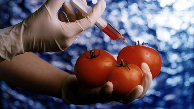 Symbolbild: Tomaten, in die eine Hand mit Gummihandschuh eine Spritze hineinsticht.