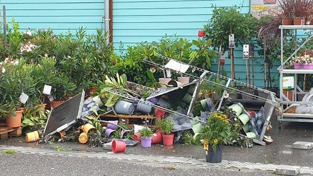 Umgestürzte Pflanzen in der Gartenabteilung der Landi Belp.