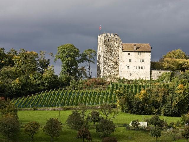 Burg mit Rebberg im Vordergrund.