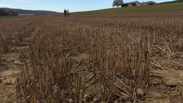 Ein Feld von unten fotografiert. Im Hintergrund stehen zwei Personen.