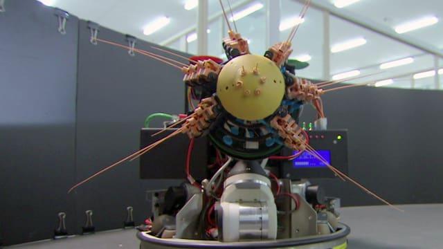 Video «Bionik - Die besten Ideen der Natur: Wahrnehmung (1/3)» abspielen