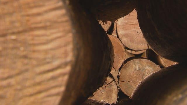 Video ««Einstein»-Spezial: Alleskönner Holz» abspielen