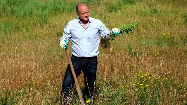Chef-Gärtner Filippo Leutenegger mit einigen ausgerissenen Goldruten.