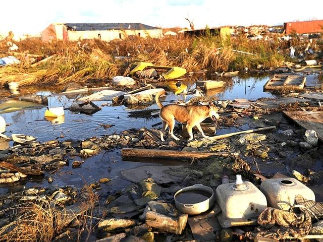 Ein einsamer Hund in der Dämmerung auf den Bahamas. Im Hintergrund liegt noch mehr Schutt, nach dem Hurrikan «Dorian».