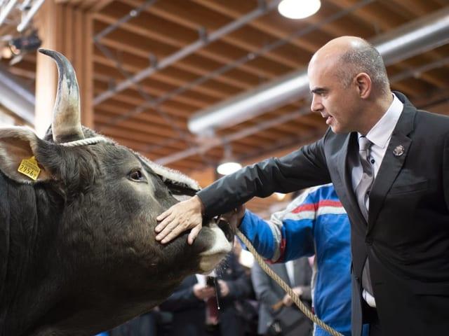Alain Berset streichelt einen Stier
