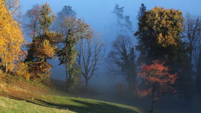 Unten Wiese, in der Bildmitte Bäume (zum Teil ohne Blätter, zum Teil mit gelben, grünen und roten Blättern) und dahinter Nebelgrau.