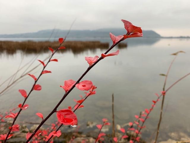 Wolkenverhangener Himmel über dem See, rote Blätter einer Pflanze im Vordergrund.