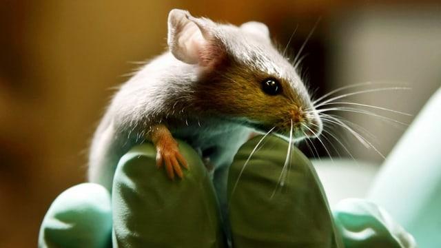 Eine Maus sitzt auf einer Hand.