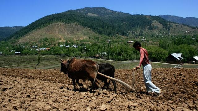 Ein Mann bei der Feldarbeit in Indien.