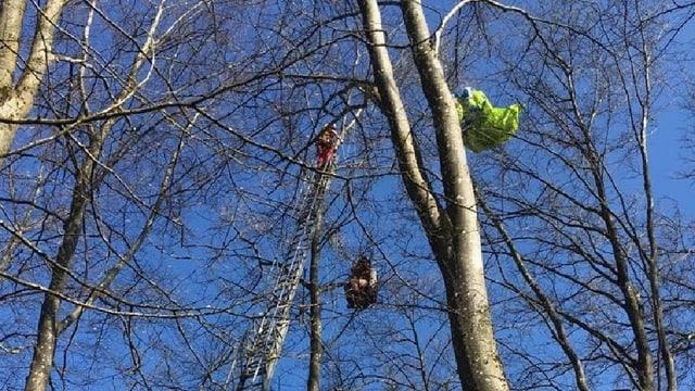 Wald, Feuerwehrleiter, in den Ästen ein Mann und ein Gleitschirm