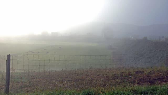 Das grasbedeckte Sisslerfeld im Nebel. In der Deponie grasen ein paar Kühe