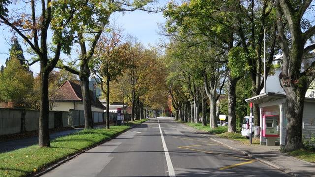 Bäume an einer Strasse