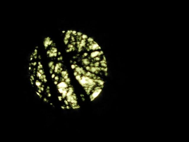 Vollmond hinter Bäumen.